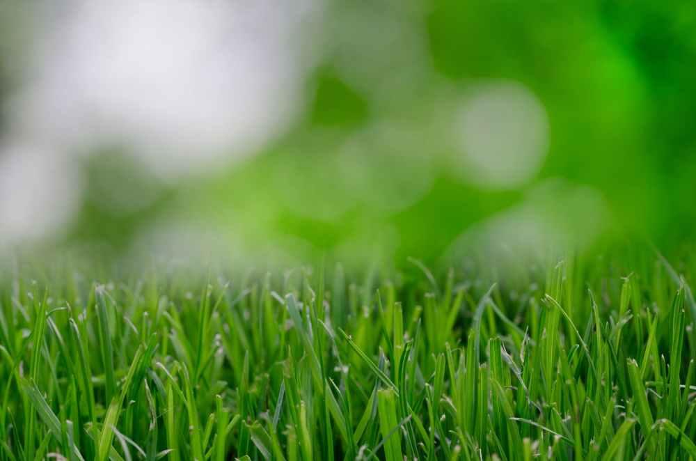 nature garden grass lawn